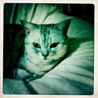 猫_e0189353_19275664.jpg