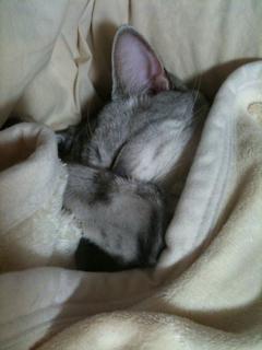 猫_e0189353_1928614.jpg