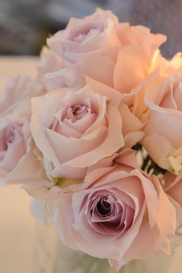 Pink Roses ♪_c0116778_81509.jpg