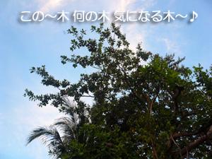 この~木 何の木 気になる木~♪_f0144385_12533799.jpg