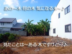 f0144385_125861.jpg
