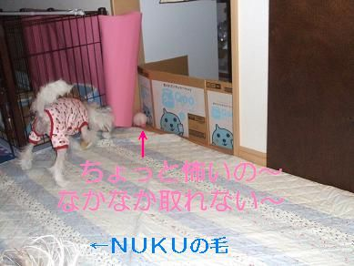 f0179203_17514635.jpg
