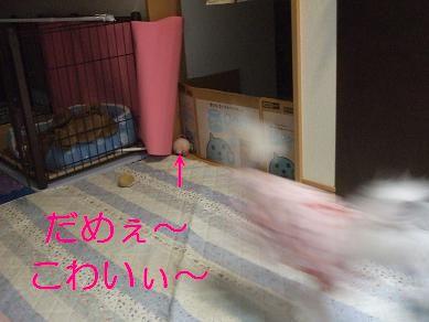 f0179203_1752255.jpg