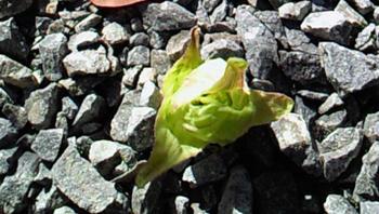 春はそこまで_a0115906_15271994.jpg