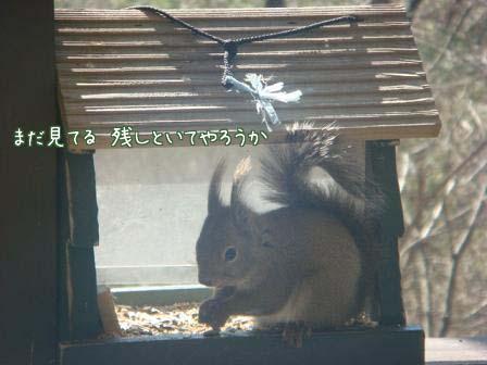 ポカポカ陽気で_f0064906_1964159.jpg
