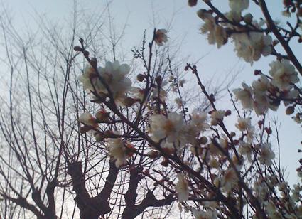 春の個展のお知らせです!_d0051613_10374237.jpg