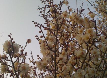 春の個展のお知らせです!_d0051613_10381082.jpg