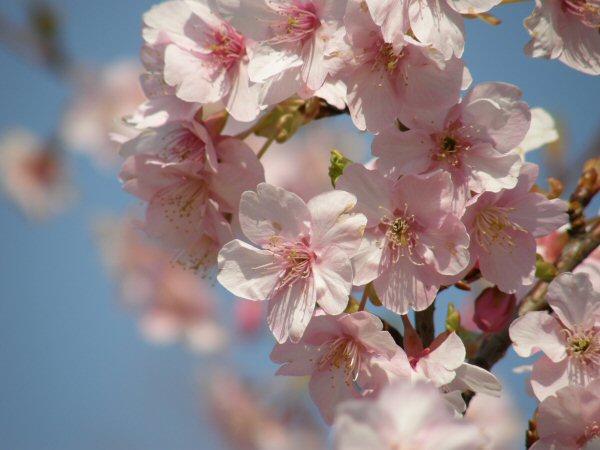 春はもうすぐ_a0027125_1932833.jpg
