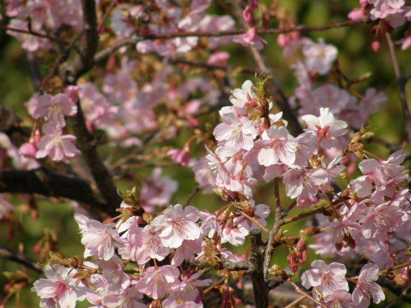 春はもうすぐ_a0027125_1934798.jpg