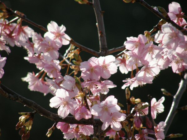 春はもうすぐ_a0027125_1941149.jpg