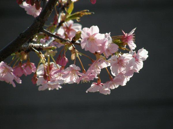 春はもうすぐ_a0027125_1942466.jpg