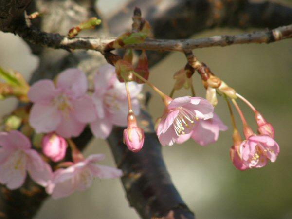 春はもうすぐ_a0027125_1943953.jpg