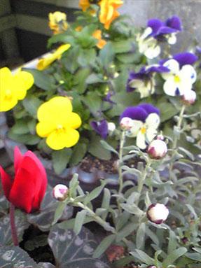 春の陽気_e0103327_20382350.jpg