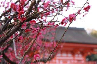週中旅行 : 京 都_d0010432_18344074.jpg