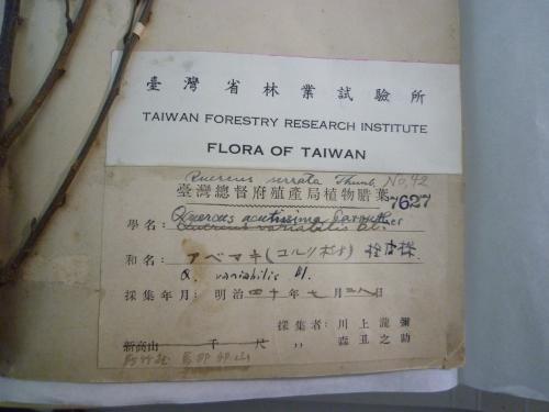 まだ台湾_c0177135_2222198.jpg