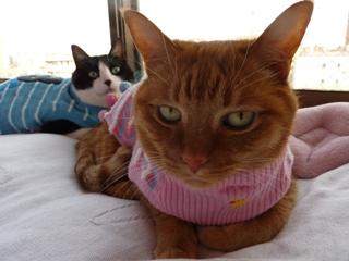 ペアルック猫 空しぇる編。_a0143140_20542494.jpg