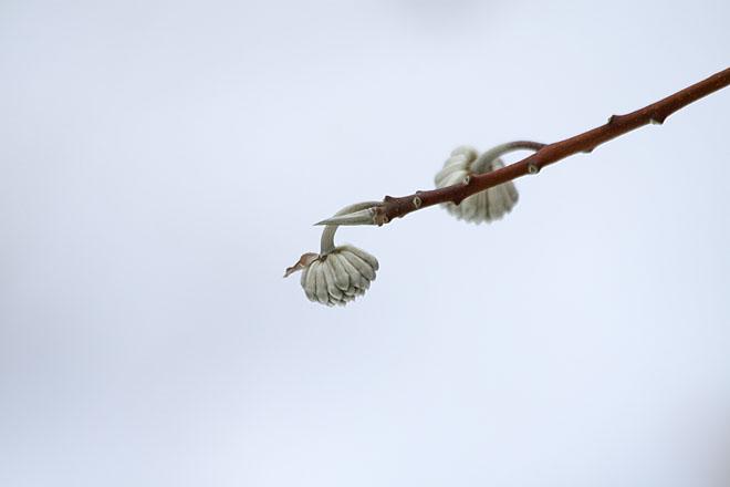 春を待つ_c0067040_20545659.jpg