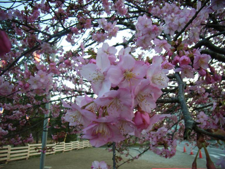 一足早い春です_a0157159_1851926.jpg