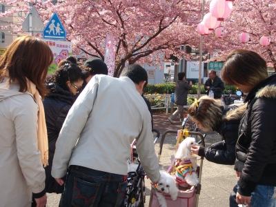 河津桜とカリちゃんファミリー記念撮影〜(^^)_b0001465_1934632.jpg