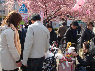 河津桜とカリちゃんファミリー記念撮影〜(^^)_b0001465_196189.jpg