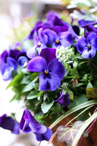 ◆植木箱にバラを植えかえる_e0154682_21405052.jpg