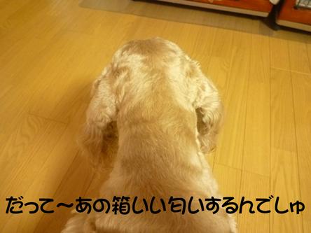 f0218182_1150279.jpg