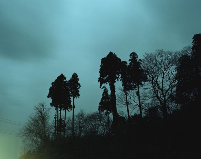ブロッコリーの木陰に_c0089792_4132313.jpg