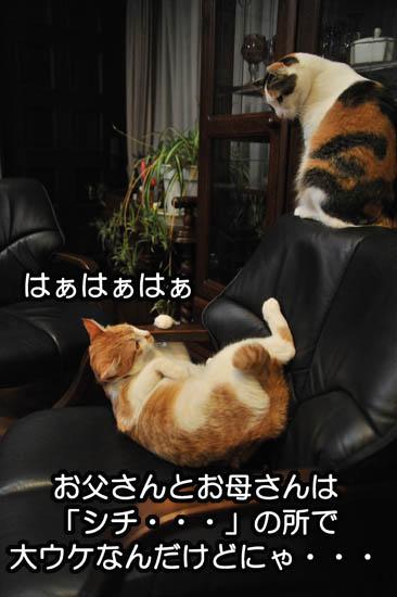 b0141397_11261315.jpg