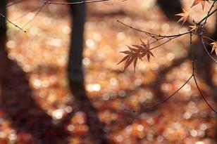 秋の女よ_c0125004_2249210.jpg