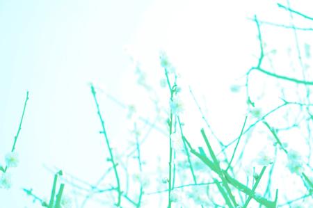 b0139407_1512333.jpg