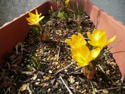 春なので・・・_e0116207_13533523.jpg