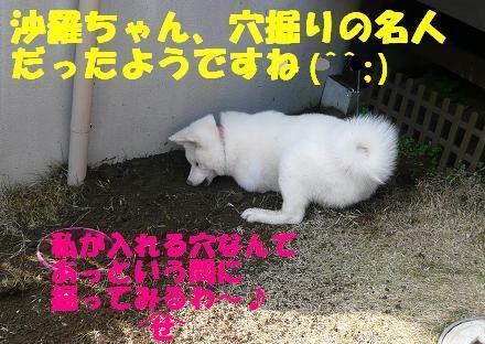 f0121712_2114424.jpg