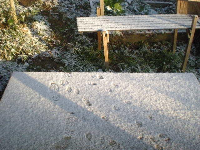 積雪の日田~~_a0125419_1631477.jpg