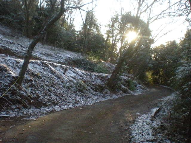 積雪の日田~~_a0125419_1641251.jpg