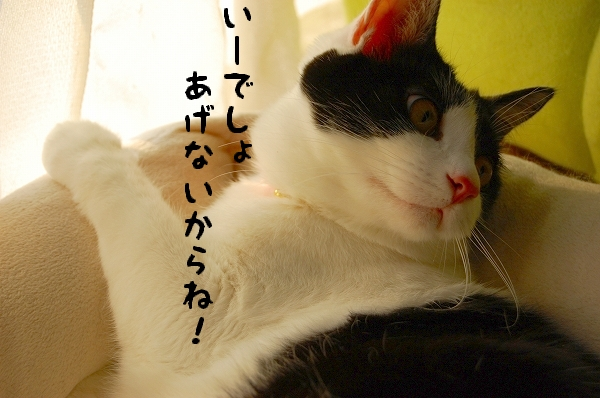 c0181639_16441.jpg