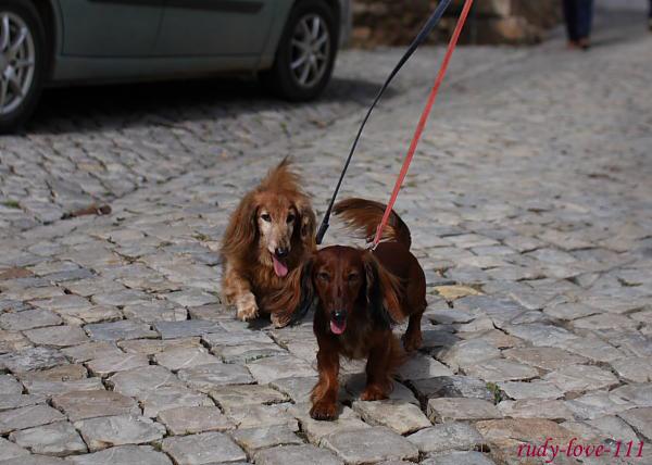 ルディ&リナのちょっとそこまでポルトガル♪ その1_f0095647_0154432.jpg
