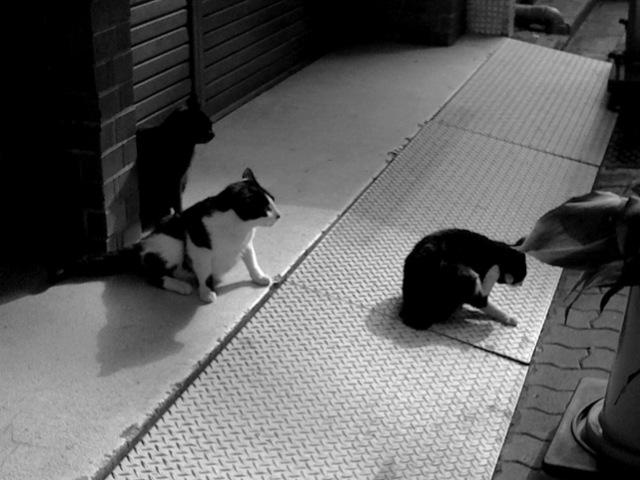 三ッ猫_f0135451_14452721.jpg