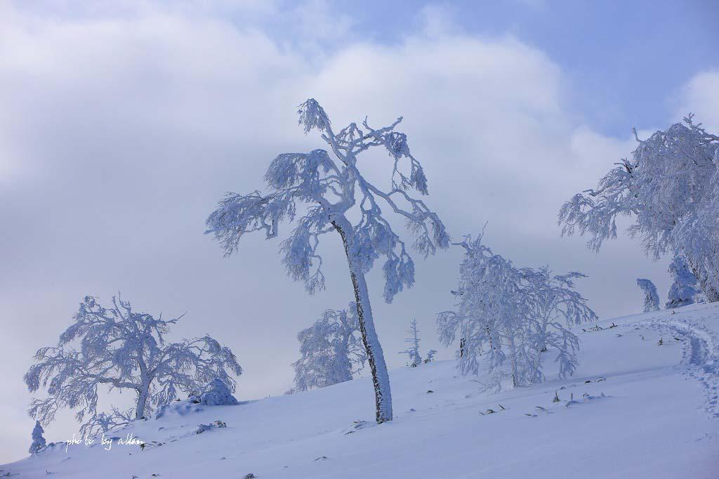 雪の中のノロッコ号より~_a0039860_19545787.jpg