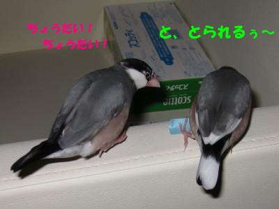 b0158061_2133406.jpg