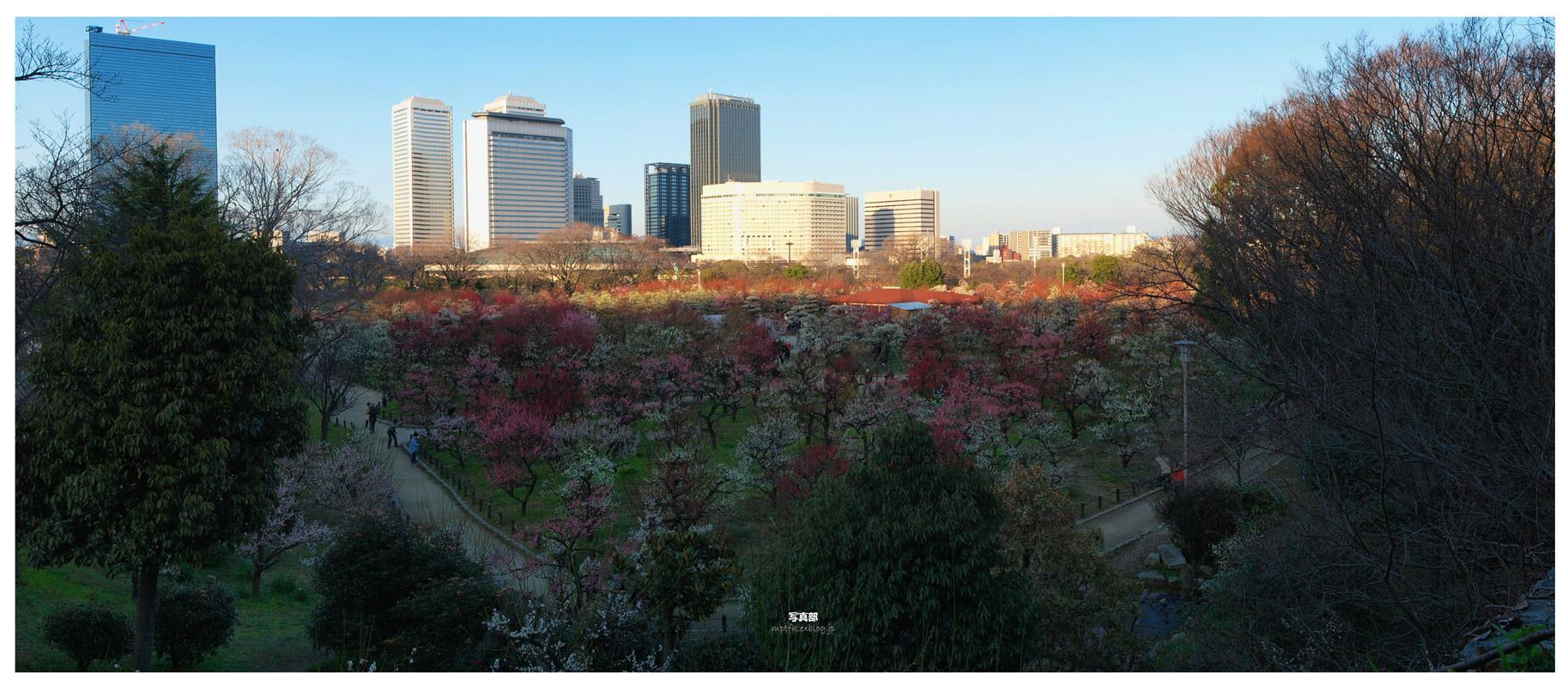 大阪城公園 梅林_f0021869_4281474.jpg
