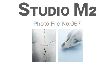 STUDIO M2 Photo File No.067「頭蓋骨」_a0002672_2257011.jpg