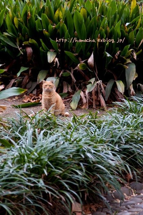 Cats In Hibiya Park #11_c0158775_204111.jpg