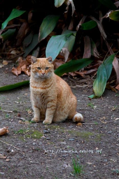 Cats In Hibiya Park #11_c0158775_20413863.jpg