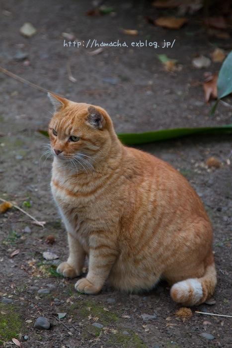 Cats In Hibiya Park #11_c0158775_20421067.jpg