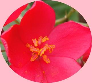 f0137275_6202435.jpg