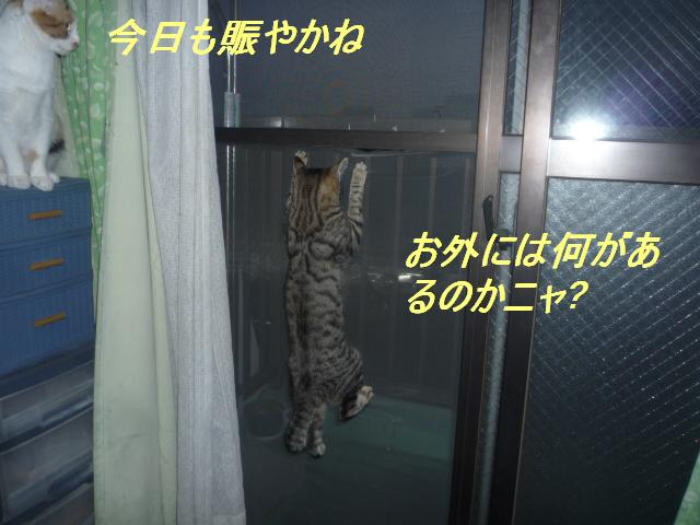 b0112380_1059459.jpg