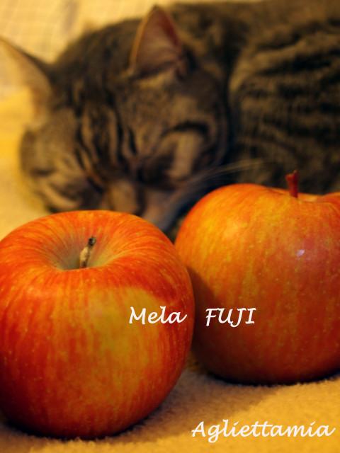 やっぱり美味しいMELA  FUJI_c0179785_16441434.jpg