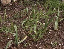 春近し~2月の畑_f0106597_22544679.jpg