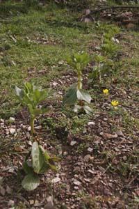 春近し~2月の畑_f0106597_2258024.jpg
