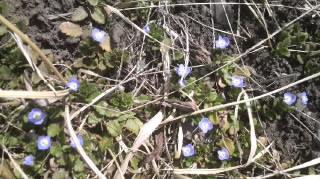 春、近し_d0062298_16432317.jpg
